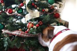 Duke and the tree2