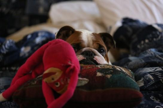 Duke, Monkey and Pillow