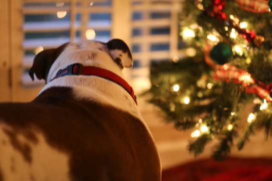 Santa Watch