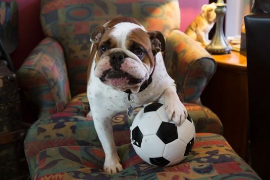 SoccerDude
